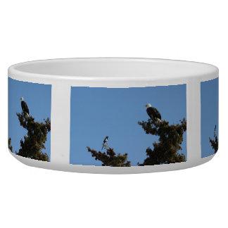 BEAMS Bald Eagle and Magpie Staredown Bowl