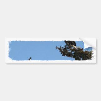 BEAMS Bald Eagle and Magpie Staredown Bumper Sticker
