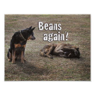 Beans again? Funny dogs photograph implying farts Poster
