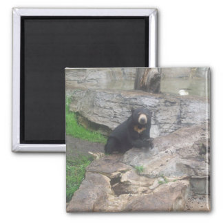bear 2 inch square magnet