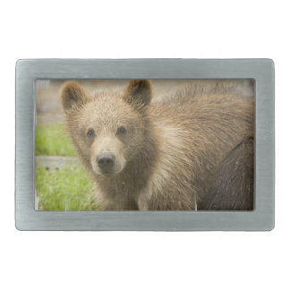 bear-65 rectangular belt buckles
