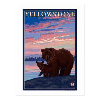 Bear and Cub - Yellowstone National Park Postcard