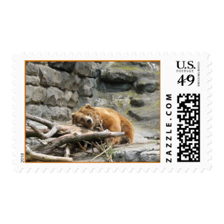 Bear at the Pittsburgh Zoo Postage Stamps