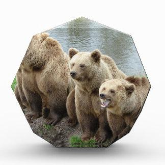 Bear bears animal custom personalize Anniversaries Award