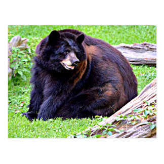 Bear (Black) Postcard
