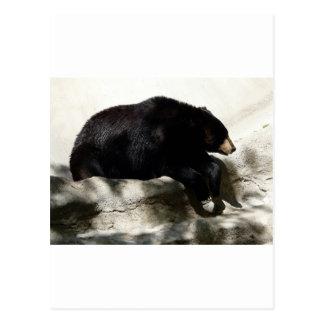bear,black postcard