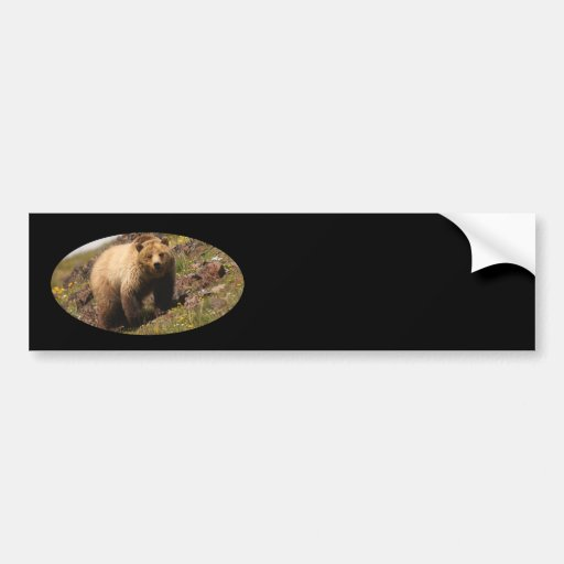 bear car bumper sticker