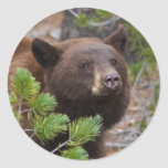 bear classic round sticker