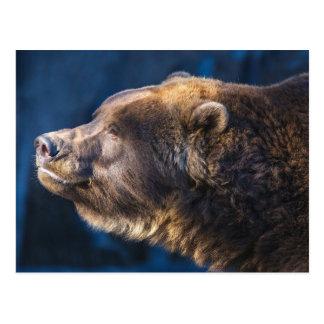 Bear Closeup Postcard
