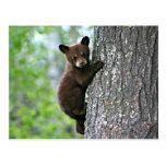 Bear Club Climbing a Tree Post Cards