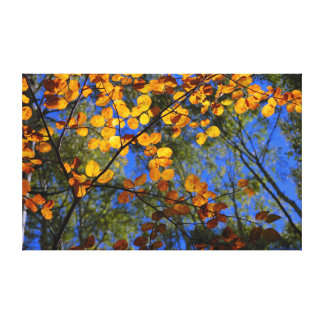 Bear Creek Stained Glass Canvas Print