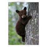 Bear Cub Climbing a Tree Cards