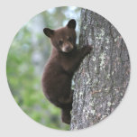 Bear Cub Climbing a Tree Classic Round Sticker