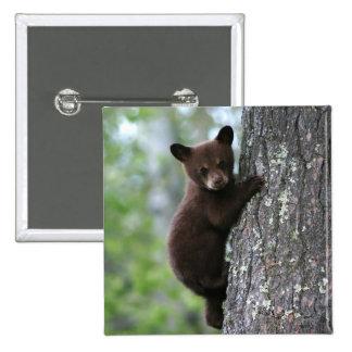 Bear Cub Climbing a Tree Pinback Button