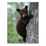 Bear Cub Climbing a Tree Postcard
