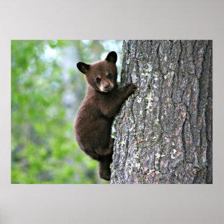 Bear Cub Climbing a Tree Poster