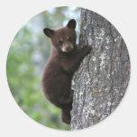 Bear Cub Climbing a Tree Round Stickers