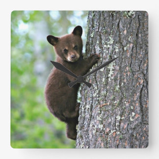 Bear Cub Climbing a Tree Square Wall Clock
