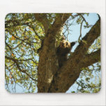 Bear Cub In A Tree01 Mouse Pad
