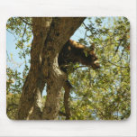 Bear Cub In A Tree02 Mouse Pad