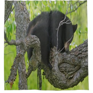 Bear Cub in a tree Shower Curtain
