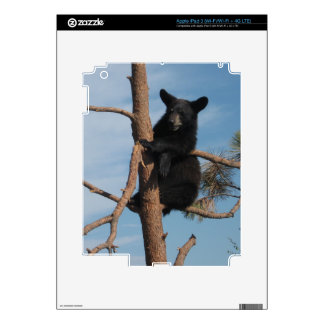 Bear Cub In A Tree Skins For iPad 3