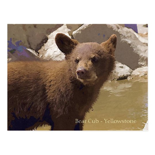 Bear Cub, Yellowstone Postcard