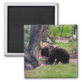 Bear Cubs Smell the Flowers 2 Inch Square Magnet