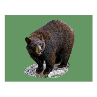 Bear Drawing Gift Postcard