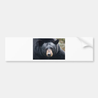 bear face bumper sticker