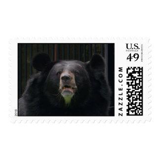 Bear face stamp