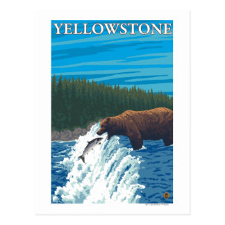 Bear Fishing in River - Yellowstone National Postcard