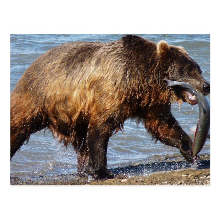 Bear Gone fishing postcard