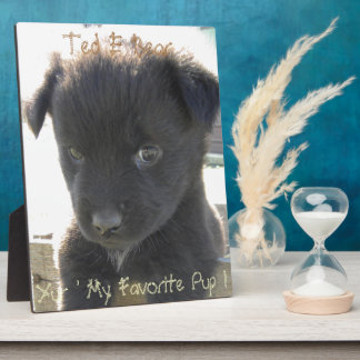 Bear in a Box Display Plaques