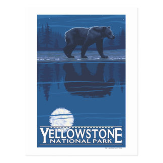 Bear in Moonlight - Yellowstone National Park Postcard
