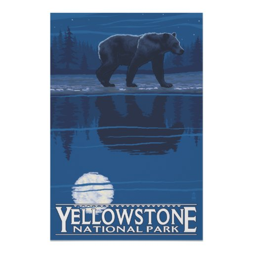 Bear in Moonlight - Yellowstone National Park Poster