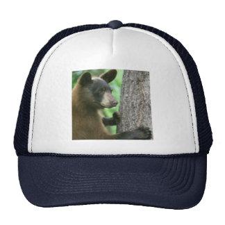 Bear in Tree hat