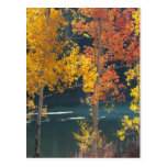 Bear Lake in Autumn Post Cards