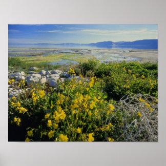 BEAR LAKE, UT, US, monkey-flower & tumbleweed, Poster