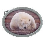 Bear Nature Belt Buckle
