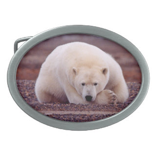 Bear Nature Belt Buckle