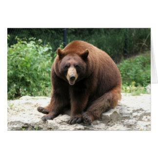 Bear Photography Card