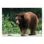 Bear Photography Greeting card