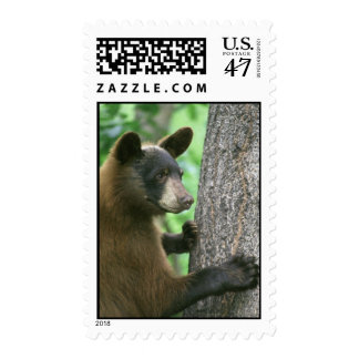 Bear Postage Stamp