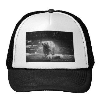 Bear Shaking Hat