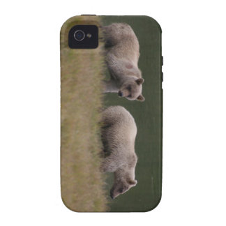 Bear Squared Case-Mate iPhone 4 Cover