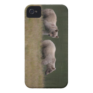 Bear Squared iPhone 4 Cover