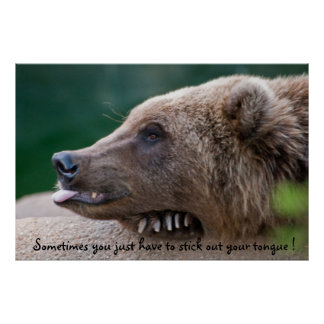 Bear Sticking Out Tongue Poster