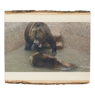 Bear Swimming Leason?  or add your picture Wood Panel