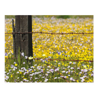 Bear Valley Wildflowers... Postcard